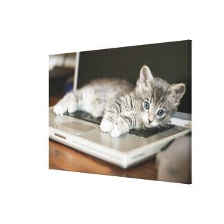 ラップトップコンピュータで休んでいる子ネコ キャンバスプリント