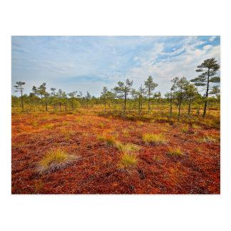 ラトビアのブラウンKemeriの沼地 ポストカード