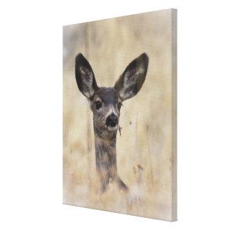 ラバシカの子鹿 キャンバスプリント