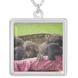 ラブラドル・レトリーバー犬の子犬のバスケット シルバープレートネックレス