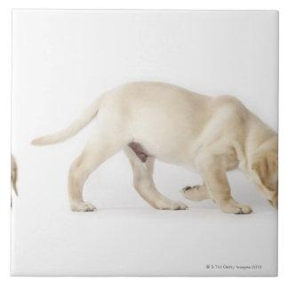 ラブラドル・レトリーバー犬の子犬の歩く、モンタージュ タイル