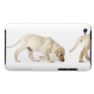 ラブラドル・レトリーバー犬の子犬の歩く Case-Mate iPod TOUCH ケース