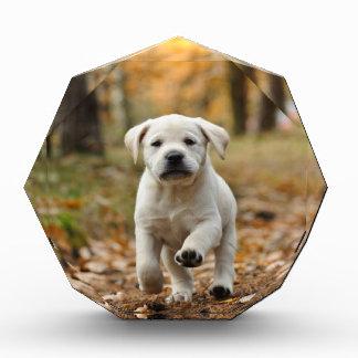 ラブラドル・レトリーバー犬の子犬 表彰盾