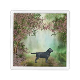 ラブラドル・レトリーバー犬の正方形のアクリルのトレイ アクリルトレー