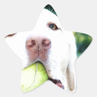 ラブラドル・レトリーバー犬犬のテニス・ボール 星シール