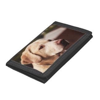ラブラドル・レトリーバー犬