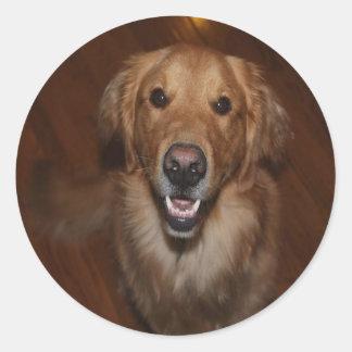ラブラドル・レトリーバー犬 ラウンドシール