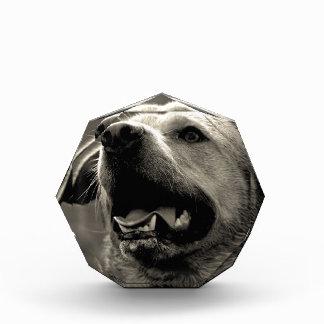ラブラドル・レトリーバー犬 表彰盾