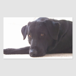 ラブラドル・レトリーバー犬 長方形シール