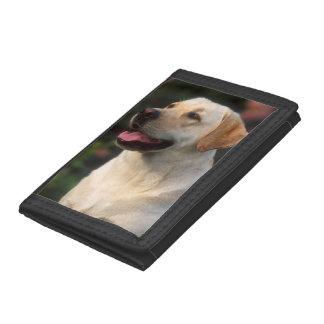 ラブラドル・レトリーバー犬、Hiltonのポートレート