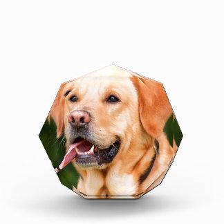 ラブラドール犬 表彰盾