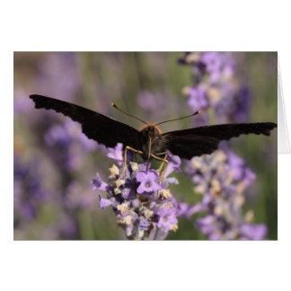 ラベンダーの果汁を吸っている孔雀蝶 カード