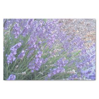 ラベンダーの花のティッシュペーパー|の自然の写真撮影 薄葉紙