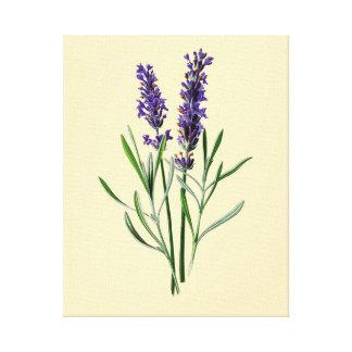 ラベンダーの花 キャンバスプリント