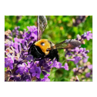 ラベンダーの蜂 ポスター