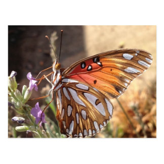 ラベンダーの郵便はがきの蝶 ポストカード