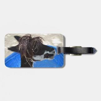 ラマの毛のunkept青いプールの家畜 ラゲッジタグ