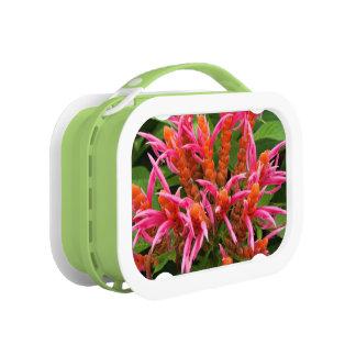 ランチボックス-珊瑚のAphelandra ランチボックス