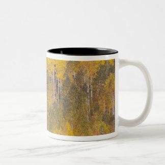 ランベルトの空、《植物》アスペンの木2 ツートーンマグカップ