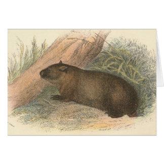 リチャードLydekker -タスマニアWombat カード