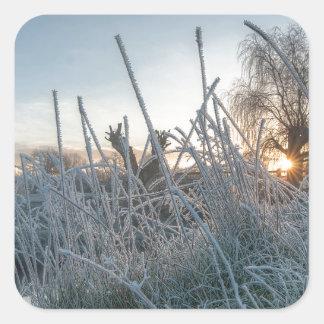 リッチモンド公園の凍結する草 スクエアシール