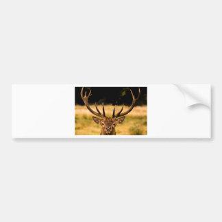 リッチモンド公園の雄鹿 バンパーステッカー