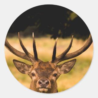 リッチモンド公園の雄鹿 ラウンドシール