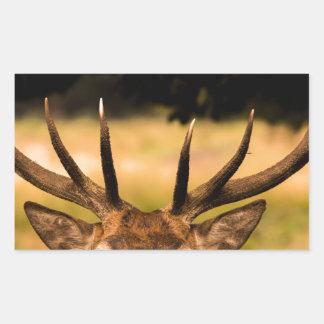 リッチモンド公園の雄鹿 長方形シール