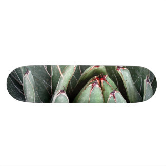 リュウゼツランのアロエのヴィエラの植物の写真のスケート スケートボード