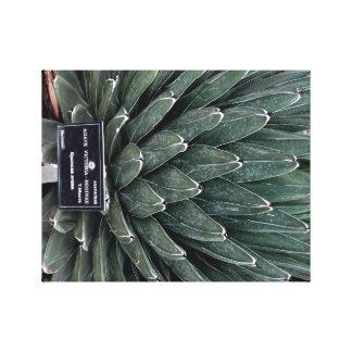 リュウゼツランのビクトリア植物の写真のキャンバスプリントのプリント キャンバスプリント
