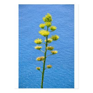 リュウゼツランの植物の花序 ポストカード