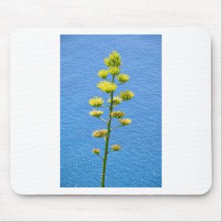 リュウゼツランの植物の花序 マウスパッド