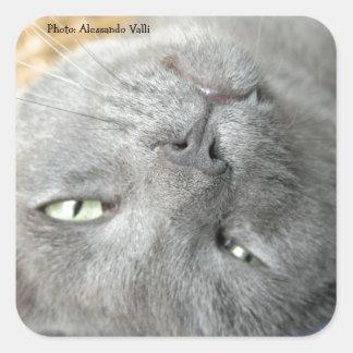 リラックスして下さい! 灰色ののどを鳴らす猫の正方形のステッカー スクエアシール