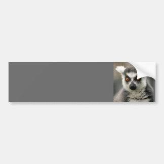 リングや輪の尾lemur バンパーステッカー
