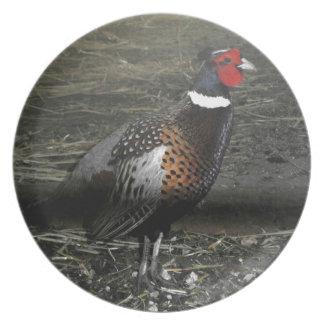 リングネックのキジの鳥 プレート