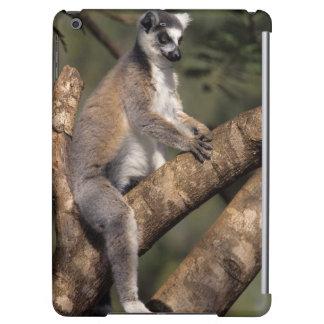 リング後につかれたLemur (Lemur Catta)、Berenty