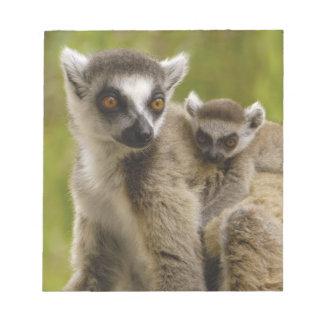 リング後につかれたlemurs (Lemurのcatta)母及び赤ん坊 ノートパッド