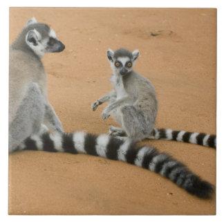 リング後につかれたLemurs、(Lemurのcatta)、Berenty タイル
