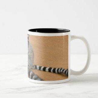 リング後につかれたLemurs、(Lemurのcatta)、Berenty ツートーンマグカップ