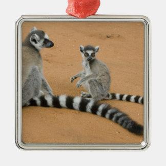 リング後につかれたLemurs、(Lemurのcatta)、Berenty メタルオーナメント