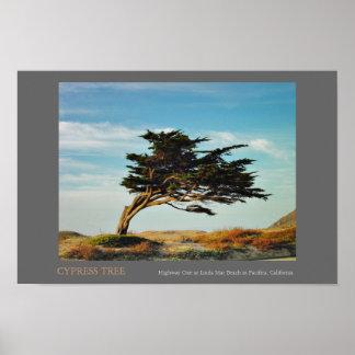 リンダ3月Cypress ポスター