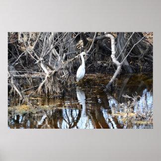 ルイジアナのバイユー-ポスターの白鷺 ポスター