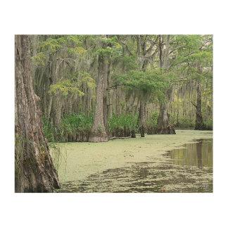 ルイジアナの泥地 ウッドウォールアート