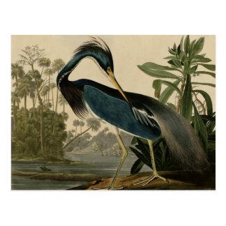 ルイジアナの鷲 ポストカード