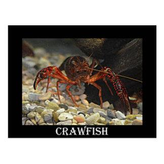 ルイジアナのCrawfish ポストカード