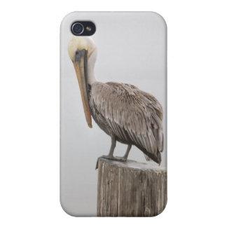ルイジアナブラウンのペリカン iPhone 4/4S CASE