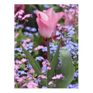ルクセンブルクのチューリップは、パリ、フランス庭いじりをします ポストカード