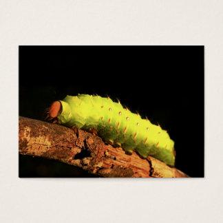 ルナガの幼虫 名刺