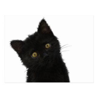 ルナBellaの黒い子ネコ ポストカード