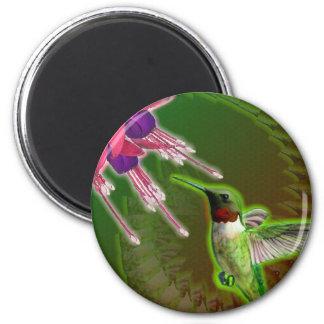 ルビー色の赤いハチドリおよび明るい赤紫色 マグネット
